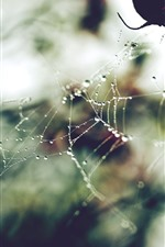 Preview iPhone wallpaper Spider web, dew