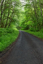 Spring, trees, green, road
