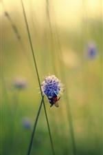 Preview iPhone wallpaper Summer, grass, purple flowers, bee