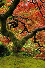 Preview iPhone wallpaper Tree, moss, red leaves, autumn