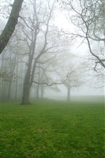 Trees, green grass, meadow, morning, fog