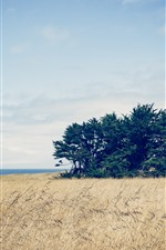 Preview iPhone wallpaper Trees, reeds, sea