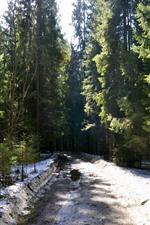 Trees, road, snow, sunshine, winter