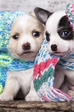 Preview iPhone wallpaper Two cute puppies, hats