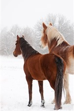 Preview iPhone wallpaper Two horses in winter, snow, back view