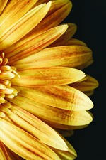 Preview iPhone wallpaper Yellow sunflower, petals, black background