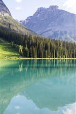 Preview iPhone wallpaper Canada, Lake Peyto, forest, trees, mountains, water reflection