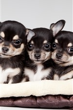 Preview iPhone wallpaper Cute five puppies