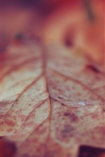 Preview iPhone wallpaper Dry leaves, water droplets, autumn