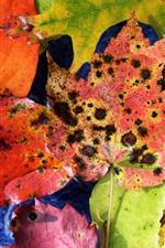 Fallen leaves, spots, autumn