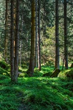 Forest, trees, stones, green grass, nature scenery