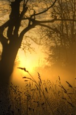 Preview iPhone wallpaper Grass, morning, sunrise, fog, summer