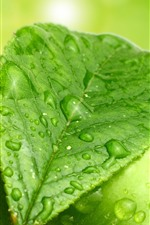 Green leaf and green apple, water droplets