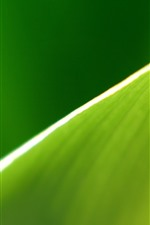 Preview iPhone wallpaper Green leaf macro photography, half