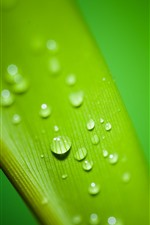 Preview iPhone wallpaper Green leaf macro photography, water droplets, dew