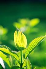 Feuilles vertes, plantes, soleil, printemps