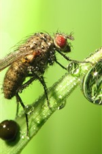 Preview iPhone wallpaper Insect, fly, water droplets