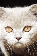 Preview iPhone wallpaper Kitten, face, eyes, look, black background