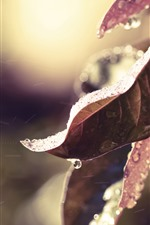 Preview iPhone wallpaper Leaves, frost, water droplets, wind