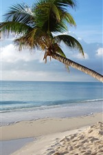 Preview iPhone wallpaper Maldives, lonely palm tree, sea, beach