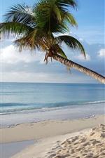 Vorschau des iPhone Hintergrundbilder Malediven, einsame Palme, Meer, Strand