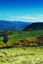Preview iPhone wallpaper Mountains, distance, green, slope, cows