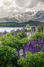 Preview iPhone wallpaper New Zealand, mountains, flowers, lake, stones, forest