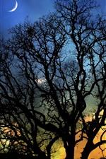 Night, moon, tree, silhouette