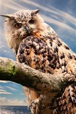 Preview iPhone wallpaper Owl look back, feathers, blue sky