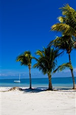 Palm trees, beach, sea, tropical, pier, boats