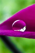 Preview iPhone wallpaper Pink flower petal close-up, three water droplets
