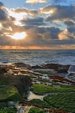 Sea, ocean, sunset, sun rays, coast, moss