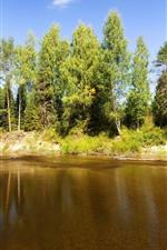 Trees, river, sunshine, nature scenery