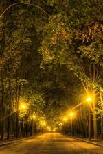 Trees, road, lights, night
