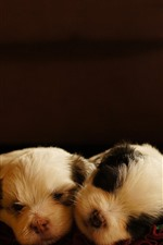 Preview iPhone wallpaper Two cute puppies sleeping