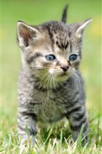 Preview iPhone wallpaper Two kittens, grass, cute pet