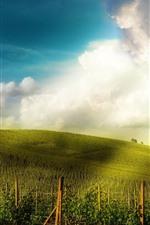Vineyard, slope, houses, sunshine