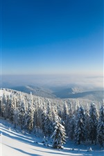 Preview iPhone wallpaper Winter, snow, forest, trees, mountain top, sunshine