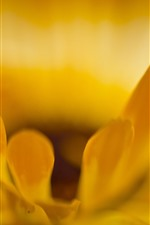Preview iPhone wallpaper Yellow petals macro photography, flower close-up