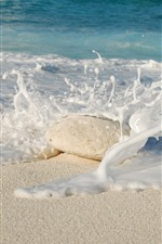 Beach, sea, foam, stone