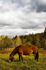 Preview iPhone wallpaper Brown horse eat grass, trees, clouds