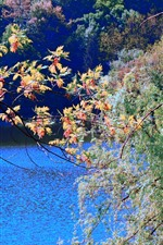 Preview iPhone wallpaper Colorful maple leaves, trees, river, autumn