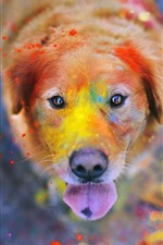 Preview iPhone wallpaper Dog, face, eyes, colorful paint