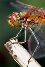 Preview iPhone wallpaper Dragonfly close-up, wings, insect