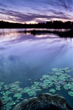 Preview iPhone wallpaper Dusk, lake, water lily, stones, silhouette