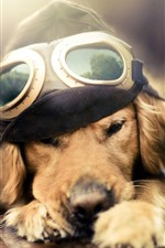 Preview iPhone wallpaper Funny dog, pilot, plane