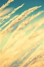 Preview iPhone wallpaper Grass, wind, summer