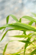 Preview iPhone wallpaper Green grass leaves, hazy background