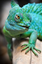 Preview iPhone wallpaper Green lizard, animal, hazy
