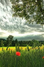 Preview iPhone wallpaper Green wheat, red poppy flowers, trees, clouds
